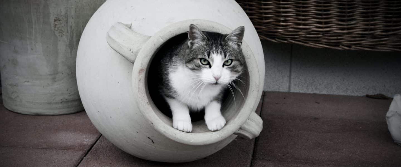 white and black cat in white round plastic basin