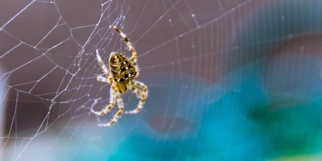 de 100 meest-voorkomende fobieën