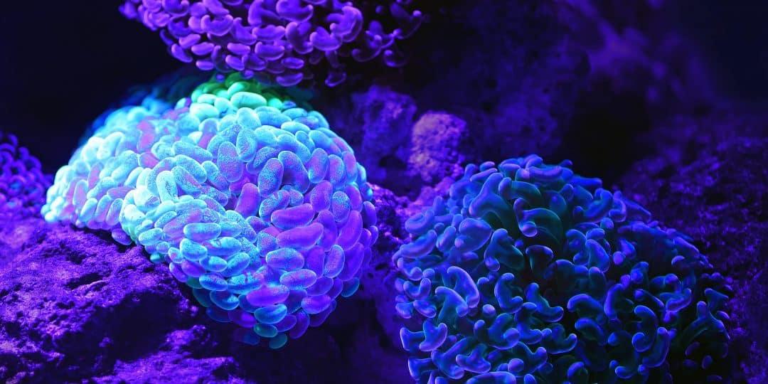 purple microscopic organisms